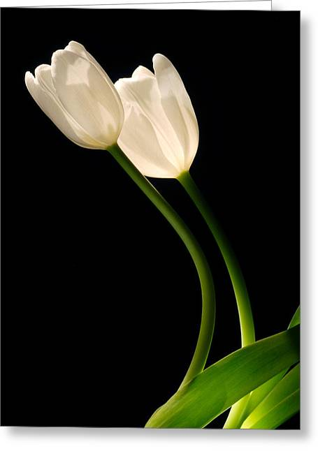 A Pair Of White Tulips Greeting Card