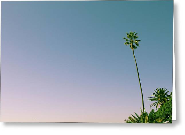 Greeting Card featuring the photograph A Palm On Its Own by Matthew Wolf