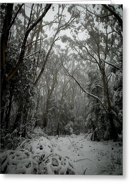 A Path Somewhere Greeting Card by Michael James