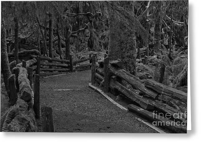 A Path Through The Giants Black And White Greeting Card