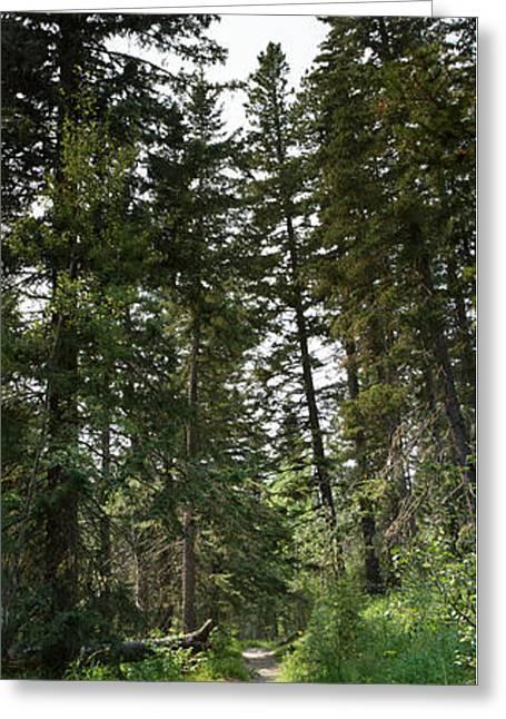 A Path Through The Trees Greeting Card