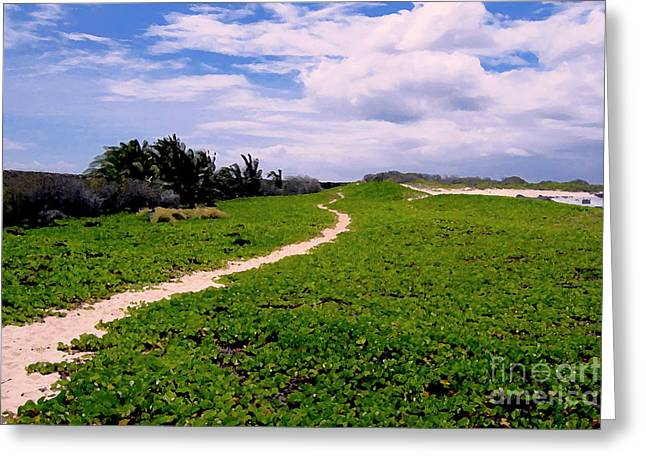 A Path Thru The Dunes Greeting Card