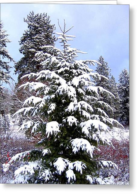 Wintry Photographs Greeting Cards - A Peaceful Winter Day Greeting Card by Will Borden