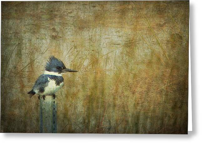 A Perched Belted Kingfisher Greeting Card