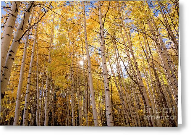 Greeting Card featuring the photograph A Perfect Day Begins by The Forests Edge Photography - Diane Sandoval