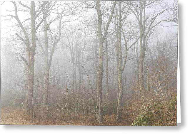 Greeting Card featuring the photograph A Perfectly Beautiful Foggy Morning by Diannah Lynch