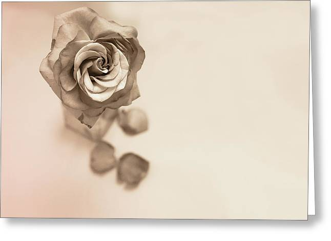 A Petal Falls Greeting Card