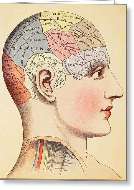 A Phrenological Map Of The Human Brain Greeting Card by English School