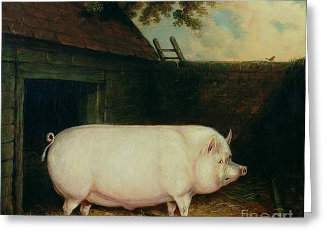 A Pig In Its Sty Greeting Card by E M Fox
