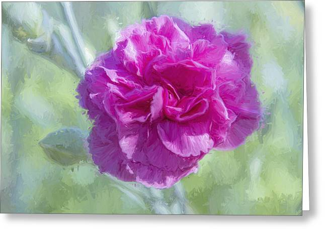 A Pink Carnation Greeting Card by Terry Davis