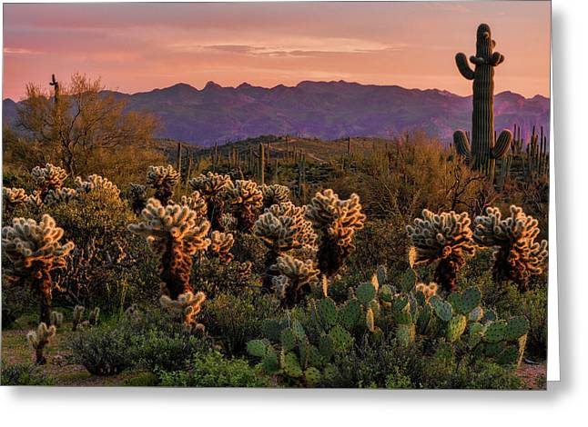 Greeting Card featuring the photograph A Pink Kissed Sunset  by Saija Lehtonen