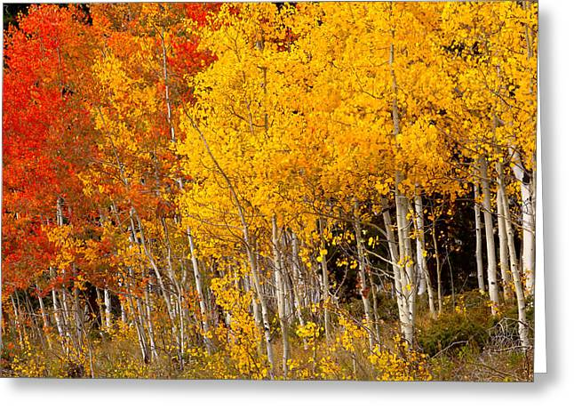 A Place In The Aspen Forest Greeting Card by Tim Reaves