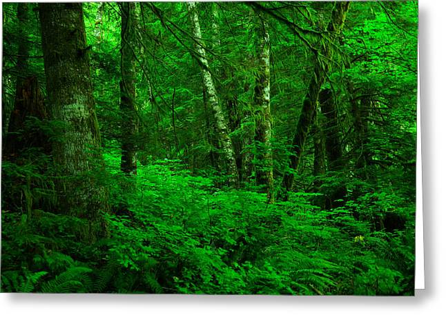 A Place In The Forest Greeting Card by Jeff Swan