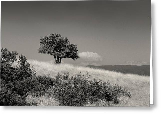 A Place Remembered Greeting Card by Gordon Beck