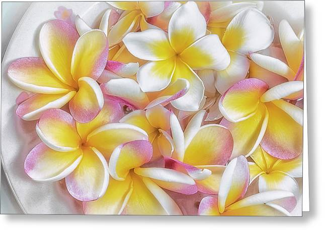 A Plate Of Plumerias Greeting Card