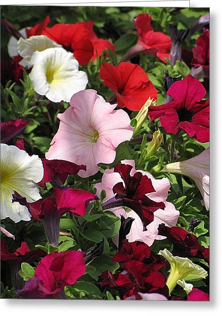 A Plethora Of Petunias Greeting Card