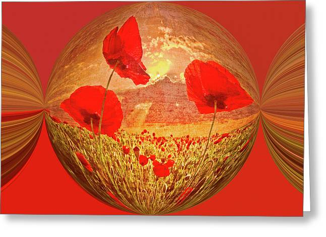 A Poppy Kind Of Morning Circles Greeting Card