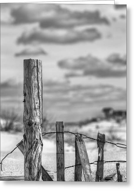 A Posting From Panama City Beach Black And White Greeting Card by JC Findley