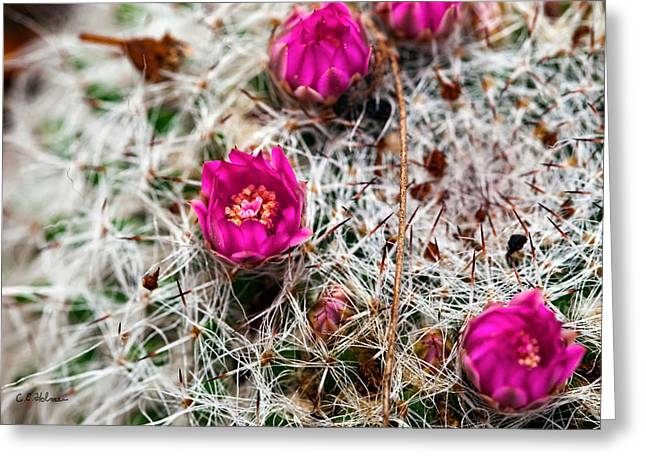 A Prickly Bed Greeting Card by Christopher Holmes