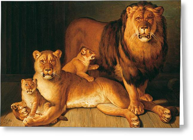 A Pride Of Lions Greeting Card