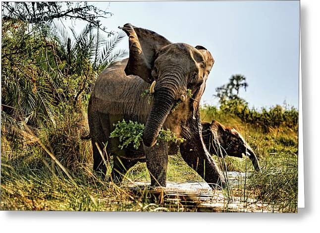 A Protective Mama Elephant With Calf  Greeting Card