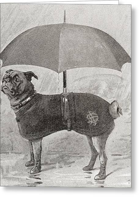 A Pug Wearing Boots, Coat And Umbrella Greeting Card by Vintage Design Pics
