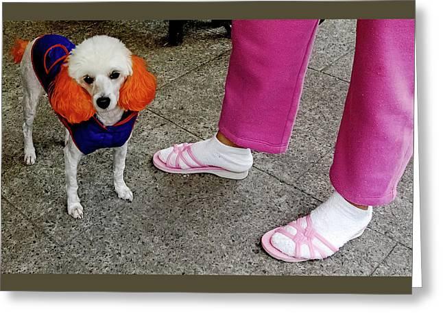 A Punk Rock Poodle Greeting Card by Bob Lynn