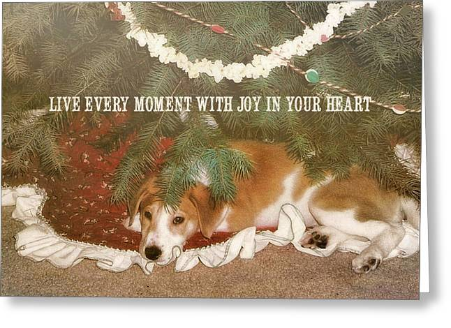 A Puppy For Christmas Quote Greeting Card by JAMART Photography