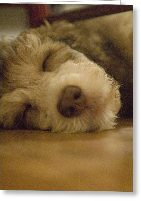 A Puppy Rests On A Wood Floor Greeting Card