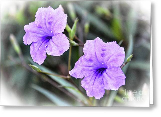 A Purple Pair Greeting Card by Lisa Kilby