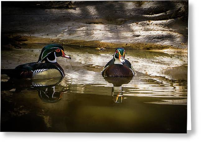 A Quiet Retreat - Wood Ducks Greeting Card