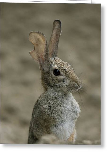 A Rabbit From The Omaha Zoo Greeting Card by Joel Sartore