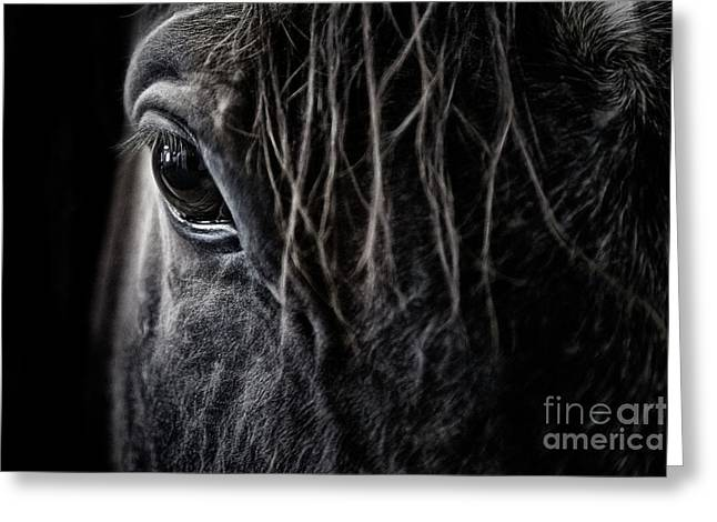 Greeting Card featuring the photograph A Race Horse Named Tikki by Brad Allen Fine Art