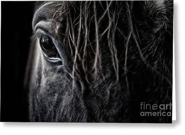 A Race Horse Named Tikki Greeting Card