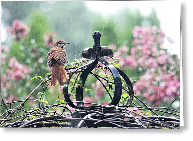 A Rainy Summer Day Greeting Card