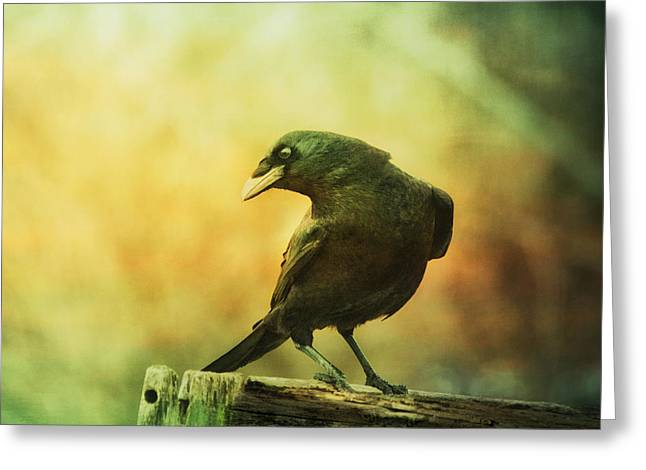 A Ravens Poise Greeting Card
