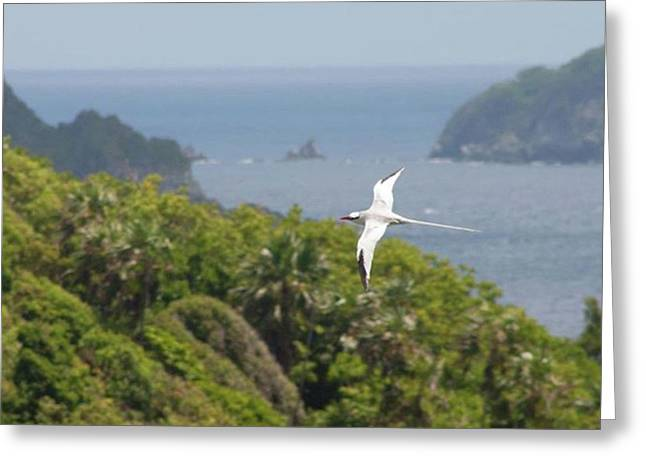 A Red-billed Tropicbird (phaethon Greeting Card by John Edwards