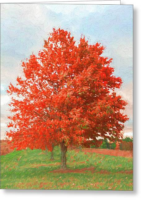 A Red Tree Greeting Card by Jeff Oates Photography