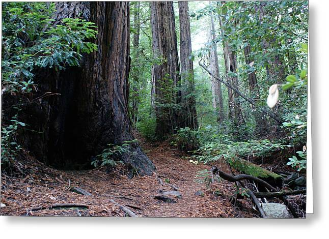 A Redwood Trail Greeting Card by Ben Upham III