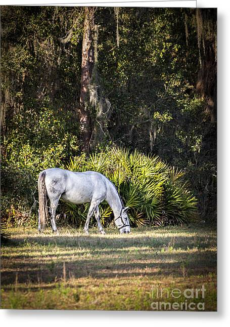 A Retired Lipizzan's Life Greeting Card by Liesl Walsh