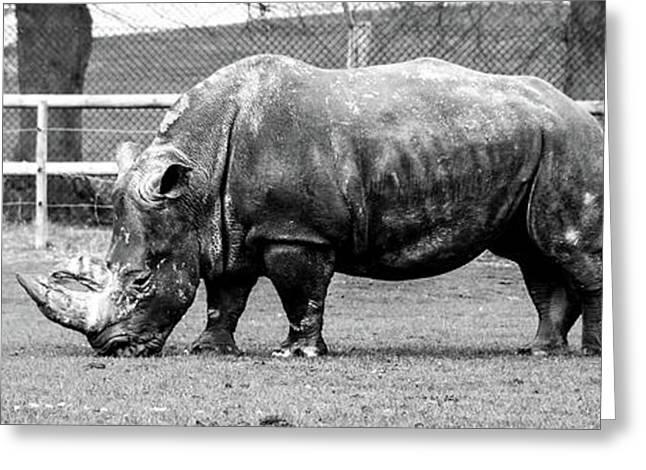 A Rhinoceros Greeting Card by Amitabh Dayal