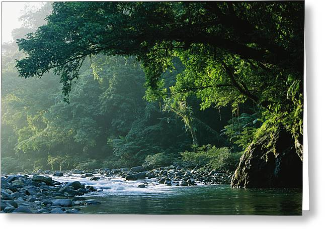 Madre Greeting Cards - A River Flows Through A Northern Sierra Greeting Card by Tim Laman