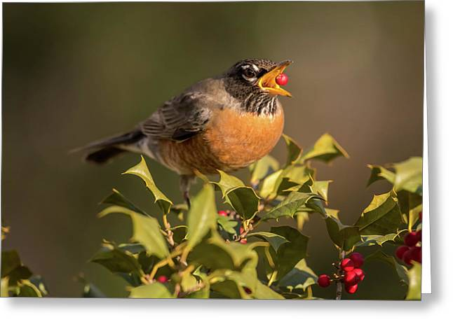 A Robin And Berry Greeting Card by Terry DeLuco