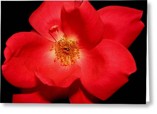 A Rose By Any Other Name Greeting Card by Dottie Dees