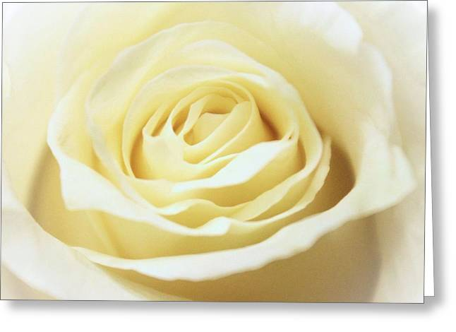 A Rose... Greeting Card by Elizabeth Budd