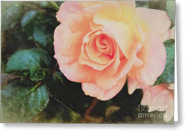 A Rose For Kathleen Greeting Card by Janice Rae Pariza