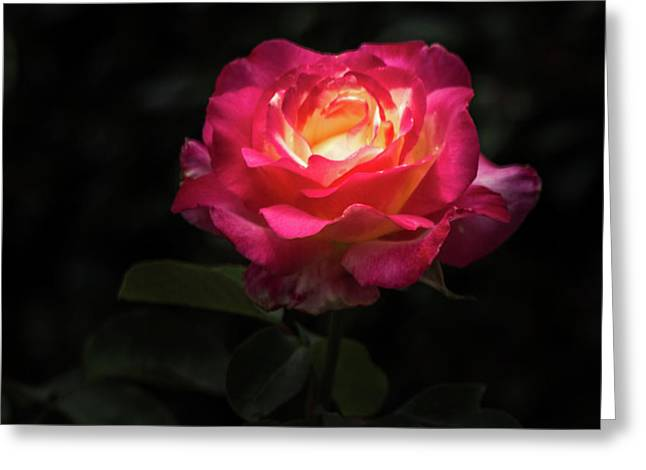 A Rose For Love Greeting Card