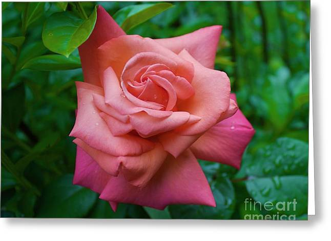A Rose In Spring Greeting Card