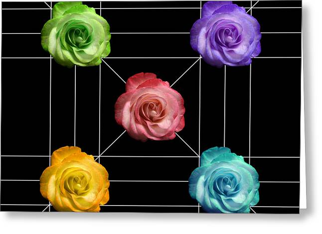 Multicolored Roses Greeting Cards - A Rose is A Rose is A Rose Greeting Card by Peter Piatt