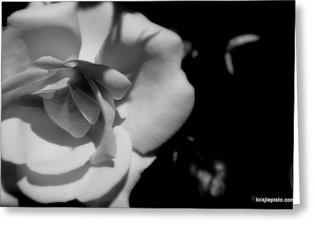 Greeting Card featuring the photograph A Rose by Lois Lepisto